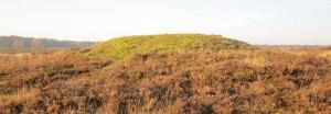 Grafheuvel op de Westerheide