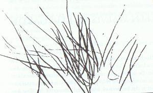 Tekening van Congo afgebeeld in 'De naakte mens'