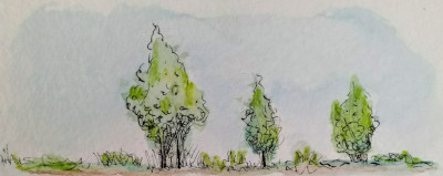 De eerste bomen, voor het oerbos
