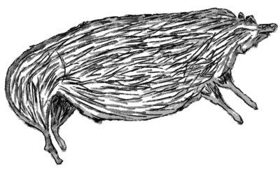 De oudste kunst ter wereld? De grottekening van een wild varken op Sulawesi
