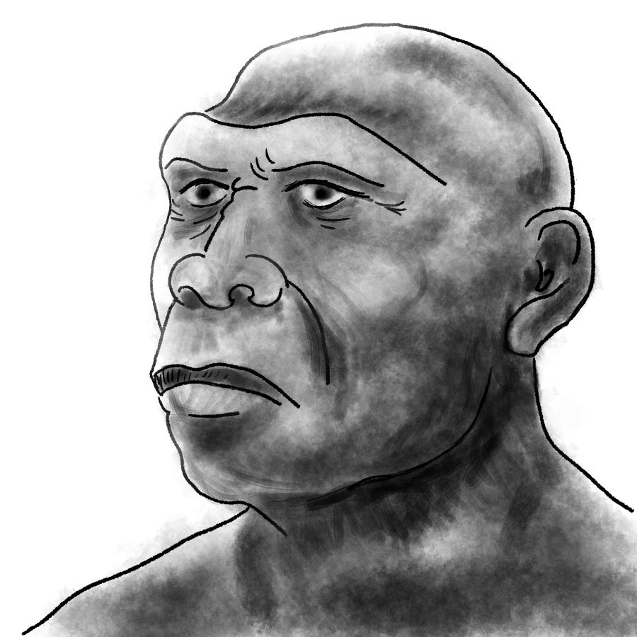 Javamens of homo erectus